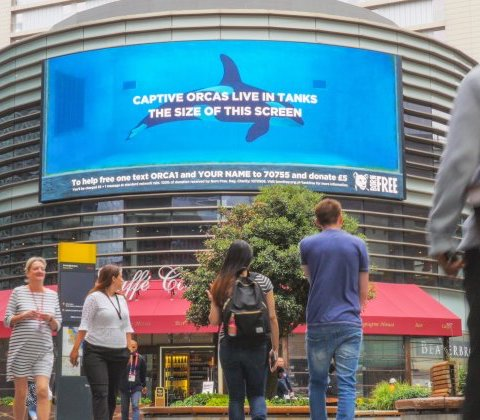 Billboard with orca in tank: 'Captive Orcas Live in Tanks the Size of This Screen'